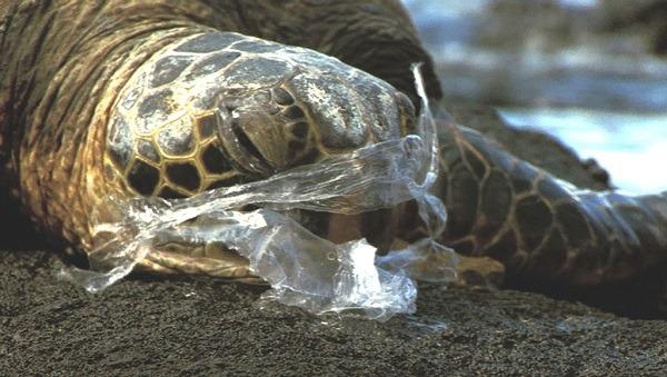 tartaruga-imprigionata_nella_plastica