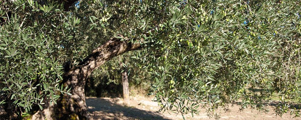 Espresso napoletano - I sapori della Valle dell'Ufita