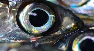 Espresso napoletano - Incanto mediterraneo: il pesce azzurro e la parmigiana di alici