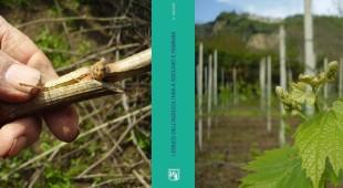 Espresso napoletano - Lessico dell'agricoltura a Soccavo e Pianura