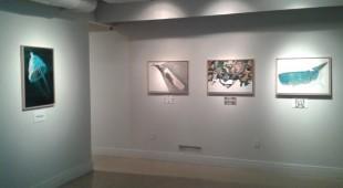 Espresso napoletano - Art 1307: a Los Angeles l'arte parla italiano