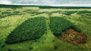 polmone verde della terra