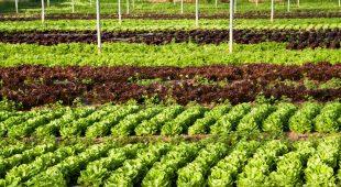 """Espresso napoletano - """"Porte Aperte in campagna- Insieme per la Terra"""": parte dalla Campania il tour alla scoperta delle aziende di produzione biologica"""