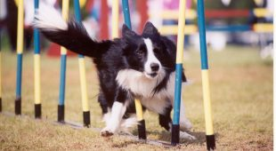 Espresso napoletano - Dogs Park: apre a Napoli l'area per cani gratuita più grande della Campania