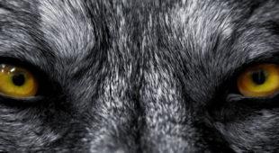 Espresso napoletano - La clinica napoletana dei lupi mannari