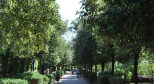 Espresso napoletano - Il Parco del Poggio ai Colli Aminei, un luogo ameno nel caos cittadino