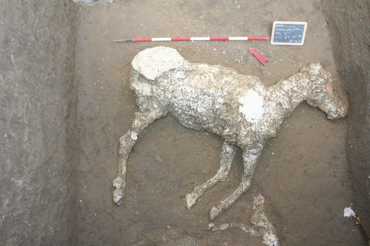 sagoma cavallo pompei