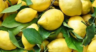 """Espresso napoletano - """"Limoni in festa 2018"""", torna la sagra del limone in penisola sorrentina"""
