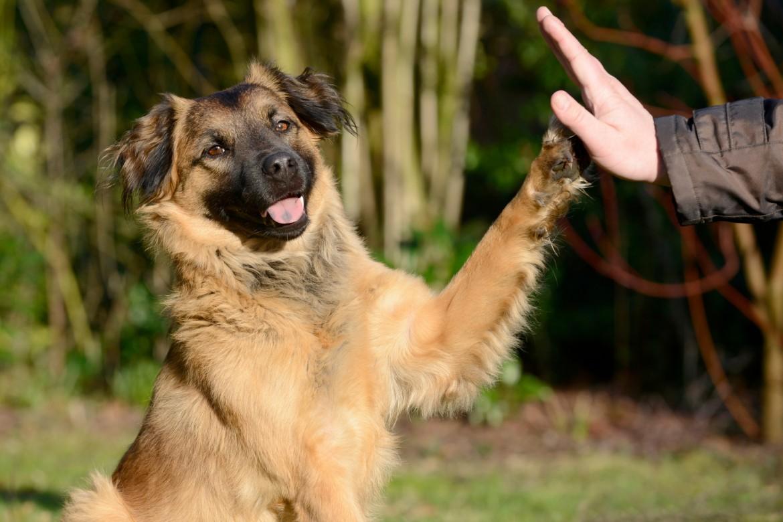 cane migliore amico dell'uomo